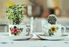 Recipientes para plantas dicas, ideias criativas