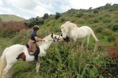 Horse Riding Holidays Dingle. Great Horse riding in Ireland. www.stable-mates.com