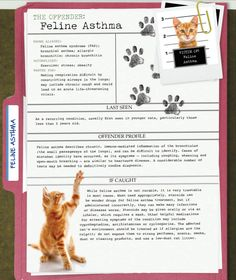 America's Most Unwanted Pet Health Problems: Feline Asthma #infographic