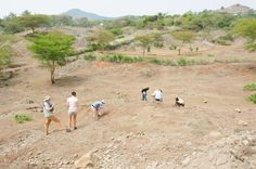 A team from the Museum begins the first day of fossil hunting at the Kiahera site on Rusinga Island.     Photo courtesy of W. Harcourt-Smith.