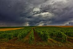 Great Wine Under the Sky by Vitor Santos on 500px