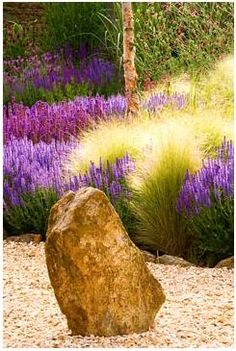 HW: Stipa tenuissima combined w Salvia (or lavendar). Gravel garden with rock, Salvia Wesuwe, Salvia X Superba, Stipa Tenuissima Plant Design, Garden Design, Drought Tolerant Garden, Gravel Garden, Salvia, Ornamental Grasses, Landscaping Plants, Dream Garden, Flower Beds