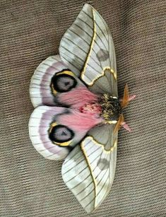 Best Picture For Insects weird For Your Taste You are looking for something, and it is going to tell Cool Insects, Bugs And Insects, Butterfly Photos, Butterfly Art, Butterfly Dragon, Monarch Butterfly, Beautiful Creatures, Animals Beautiful, Cute Animals