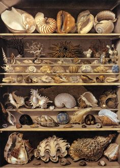 Leroy de Barde - Alexandre-Isidore  Selection of Shells Arranged on Shelves. Watercolour and Gouache on heavy paper. 125 x 90 cm. Musée du Louvre, Paris