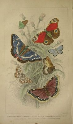 vintage butterfly print - Google Search