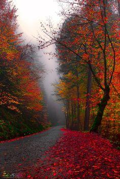 ~~Love's color by Zeki Seferoglu~~