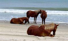 Carova Beach, North Carolina..  very remote and very beautiful.