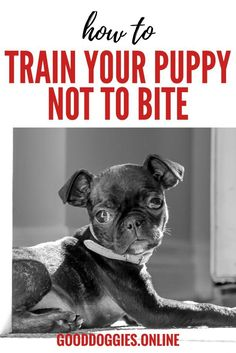 Puppy biting and nipping is something that is best corrected right away. Check out these puppy training tips to stop biting before it gets bad.