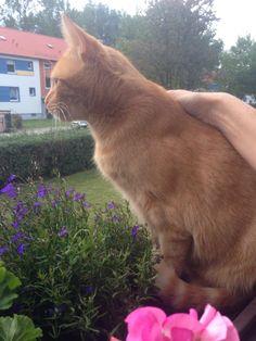 #Tiere #Katze