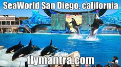 SeaWorld San Diego, california>>>Situated in sunny San Diego, SeaWorld is characterized by its theme of marine mammals, daring rides and live shows. Through shows, displays and enclosures people can learn about the world's oceans and the creatures that inhabit them such as dolphins, killer whales, walruses, penguins and Polar bears. @@Visit our website : http://www.flymantra.com@@Visit Facebook Page : https://www.facebook.com/pages/Fly-Mantra/194411557267665?ref=hl