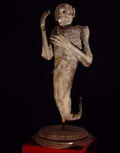 Gaff Fiji FeeJee MERMAID MUMMIFIED NAUTICAL  Sculpture Siren Décor Prop