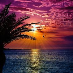Sunset over ocean Beautiful Sunset, Beautiful Beaches, Beautiful World, Stunningly Beautiful, Sunset Wallpaper, Beach Pictures, Belle Photo, Beautiful Landscapes, Mother Nature