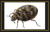 Resources | Western Pest Control