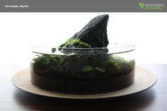Detailed step by step of a Wabi-Kusa. Scape and photos are by Oleg Foht. You can set this one with a high water level or a very low water level but you need to see how the plants grow you chose for your Wabi-Kusa. Enjoy!