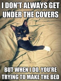 funny cat in bed