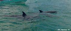 #siankaan #riserva #tour #biosfera #patrimonio #unesco #rivieramaya #caribe #caraibi #sol #sole #mar #mare #ff #playadelcarmen #playa #spiaggia #trasferirsi #messico #mexico #riviera #italia #limpio #vacaciones #vacanze www.playavintage.com