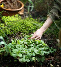 {<3} How to start a medicinal herb garden