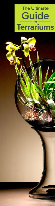 Thinking of adding a terrarium to your space? This guide has everything you need to know @ http://www.ambius.com/blog/ultimate-guide-to-terrariums/