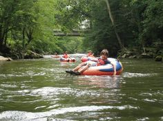 sevierville tennessee attractions | ... Romp Reviews - Sevierville, Sevier County Attractions - TripAdvisor
