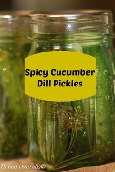 Candied Cucumber Rings (Great Use for Oversized Cucumbers)