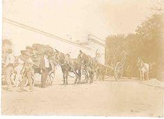 Mulos llegando de la Viña. / Mules arriving from the vineyard.