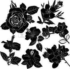 white rose: flowers