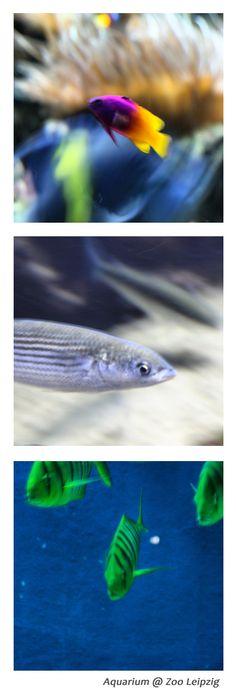 Exotische Fische im Aquarium im #Zoo #Leipzig #VisitLeipzig #Urlaub #Frühling