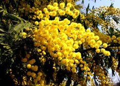 La poesia di Luciano Gambarini per l'8 marzo - http://www.gussagonews.it/poesia-luciano-gambarini-8-marzo/