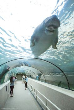 Sydney Aquarium, Sydney, Australia.  Impossible, I know, but I could spend days in there.