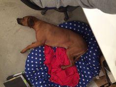 Welthundetag 2016 - Bürohund Ocho