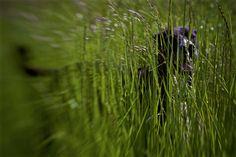 hide and seek Nature, Naturaleza, Nature Illustration, Scenery, Natural