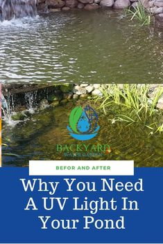 A properly sized UV light is only one piece of the puzzle to ridding your pond of unsightly types of algae. A UV light will give you crystal clear water. Koi Pond Design, Landscape Design Small, Small Garden Design, Landscape Plans, Pond Landscaping, Tropical Landscaping, Tropical Gardens, Pond Algae, Pond Plants