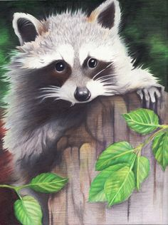 Posts about Color Pencil Drawings written by jennifermou Raccoon Drawing, Raccoon Art, Anime Wolf Drawing, Drawing Cartoon Faces, Animal Sketches, Animal Drawings, Art Drawings, Pencil Drawings, Art Shed