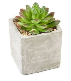 Grey Concrete Mini Artificial Spikey Plant   New Look