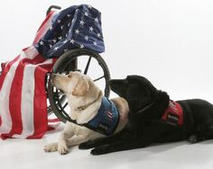 Furry Heroes  The mission of Patriot PAWS is to train and provide service dogs of the highest quality at no cost to disabled American veterans and others with mobile disabilities in order to help restore their physical and emotional independence.