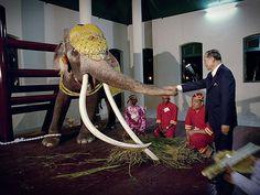{We Love The King Bhumibol Adulyadej} King Phumipol, King Rama 9, King Of Kings, King Queen, King Thailand, Thailand Travel, Thai Elephant, White Elephant, Queen Sirikit