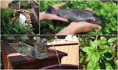 Aquaponics Garden: Growing Organic Vegetables | www.coolgarden.me