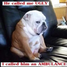 Never mess with the bulldog