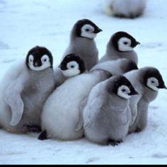 April 25: World penguin day