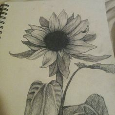 Sunflower drawing.