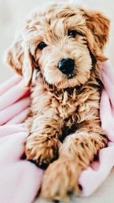 Dog And Puppies Memes .Dog And Puppies Memes Cute Baby Animals, Animals And Pets, Funny Animals, Cute Puppies, Cute Dogs, Dogs And Puppies, Doggies, Funny Dogs, Doodle Dog