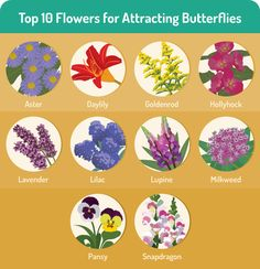 plant these flowers to attract butterflies to your garden