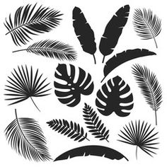 Find Set Vector Silhouettes Tropical Leaves Monochrome stock images in HD and millions of other royalty-free stock photos, illustrations and vectors in the Shutterstock collection. Thousands of new, high-quality pictures added every day. Free Vector Graphics, Free Vector Art, Free Vector Images, Leaf Silhouette, Silhouette Vector, Dinosaur Silhouette, Flor Tattoo, Leaf Clipart, Leaf Illustration