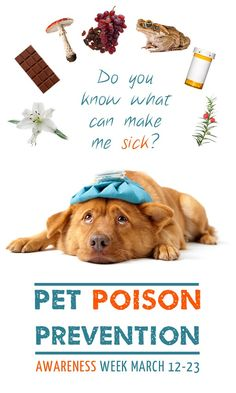 Awareness week has past, but the information is always important. Keep your pets safe.