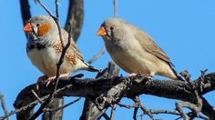 Video: Birds observed arguing over parental duties for first time ...