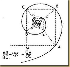 """The Fibonacci spiral is considered a logarithmic spiral, which are found everywhere in nature. Jakob Bernouli, a mathematician from a great family of brilliant people, called the logarithmic spiral spira mirabilis, or """"the Miraculous Spiral,"""" so called because the size increases but its shape is unaltered with each successive curve. This kind of spiral shows up in shells, in hurricanes, in flowers and even in the human body!"""