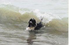Portie surfing