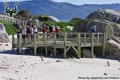 Table Mountain - Boulders - Deck