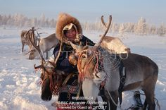 Image of vikka piak, a forest nenet girl, harnesses one of her reindeer.numto,khanty-mansiysk, siberia, russia by ArcticPhoto