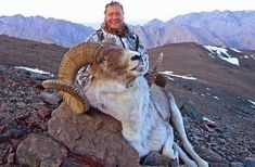 The Tian Shan Argali (Ovis ammon kerelini) is also called Argali del Tian Shan, and Argali du Tian Shan, but most hunters consider all Argali Marco Polo Sheep. Hunting Outfitters, Tian Shan, Big Game Hunting, Marco Polo, Wild West, Outdoor Activities, Animal Kingdom, Sheep, Goats